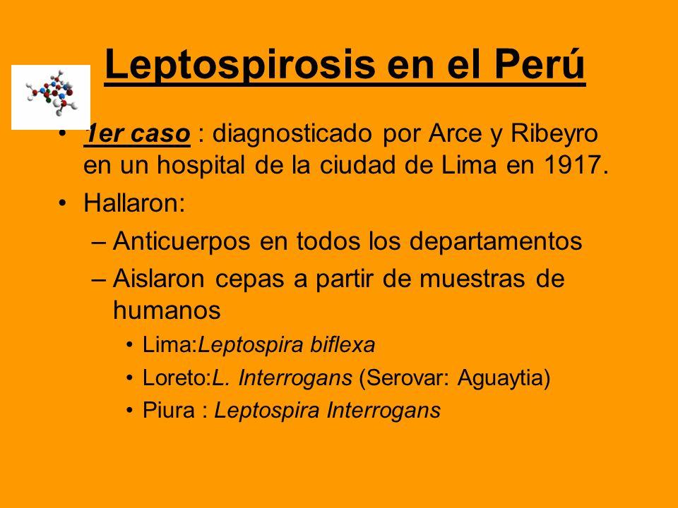 Leptospirosis en el Perú 1er caso : diagnosticado por Arce y Ribeyro en un hospital de la ciudad de Lima en 1917. Hallaron: –Anticuerpos en todos los