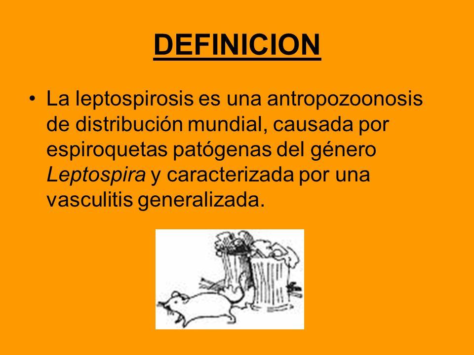 DEFINICION La leptospirosis es una antropozoonosis de distribución mundial, causada por espiroquetas patógenas del género Leptospira y caracterizada p