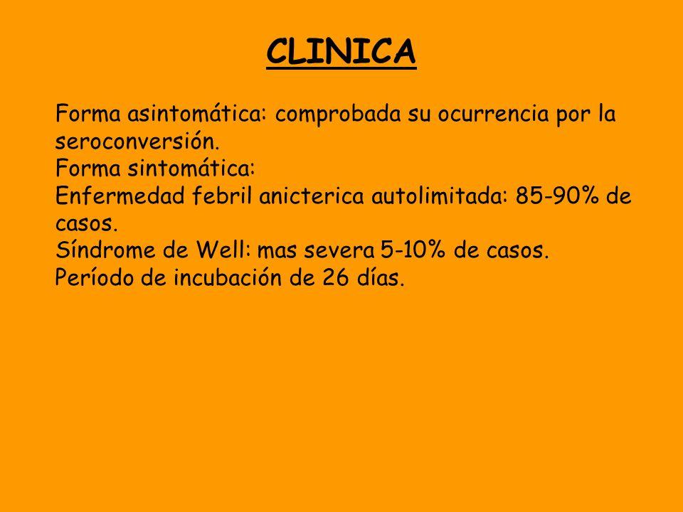 CLINICA Forma asintomática: comprobada su ocurrencia por la seroconversión. Forma sintomática: Enfermedad febril anicterica autolimitada: 85-90% de ca