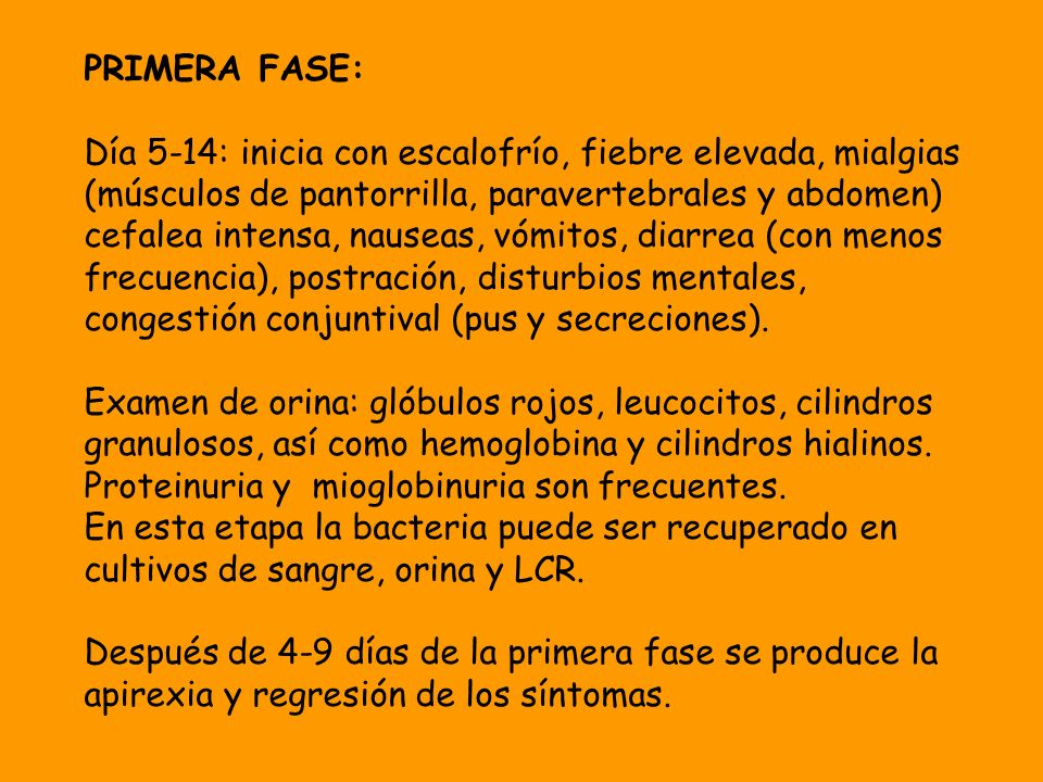 PRIMERA FASE: Día 5-14: inicia con escalofrío, fiebre elevada, mialgias (músculos de pantorrilla, paravertebrales y abdomen) cefalea intensa, nauseas,