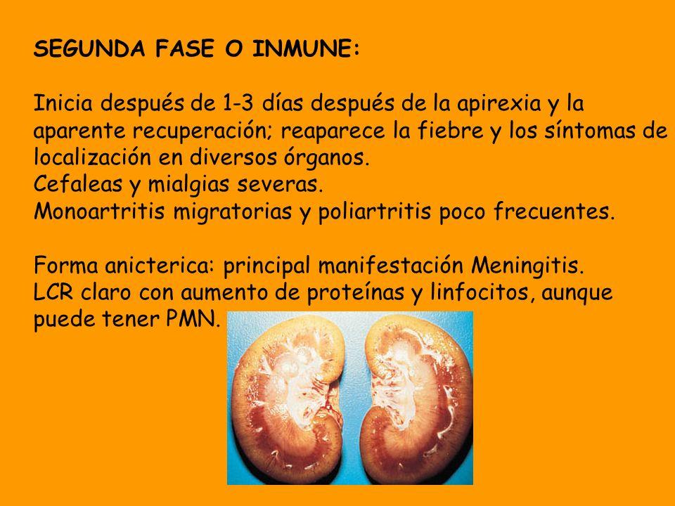 SEGUNDA FASE O INMUNE: Inicia después de 1-3 días después de la apirexia y la aparente recuperación; reaparece la fiebre y los síntomas de localizació