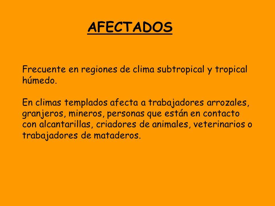 AFECTADOS Frecuente en regiones de clima subtropical y tropical húmedo. En climas templados afecta a trabajadores arrozales, granjeros, mineros, perso