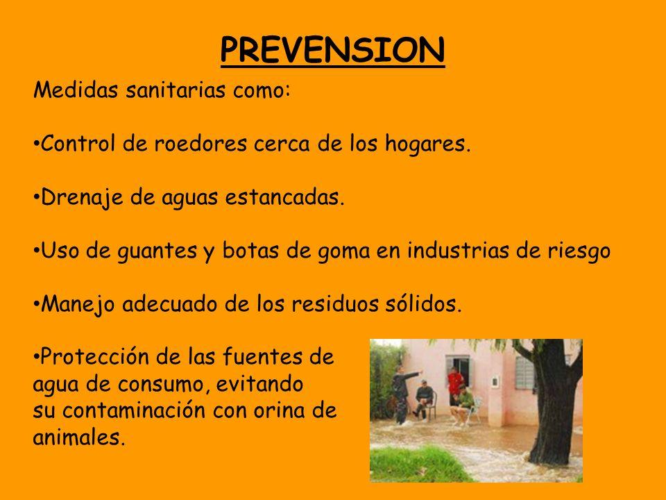PREVENSION Medidas sanitarias como: Control de roedores cerca de los hogares. Drenaje de aguas estancadas. Uso de guantes y botas de goma en industria