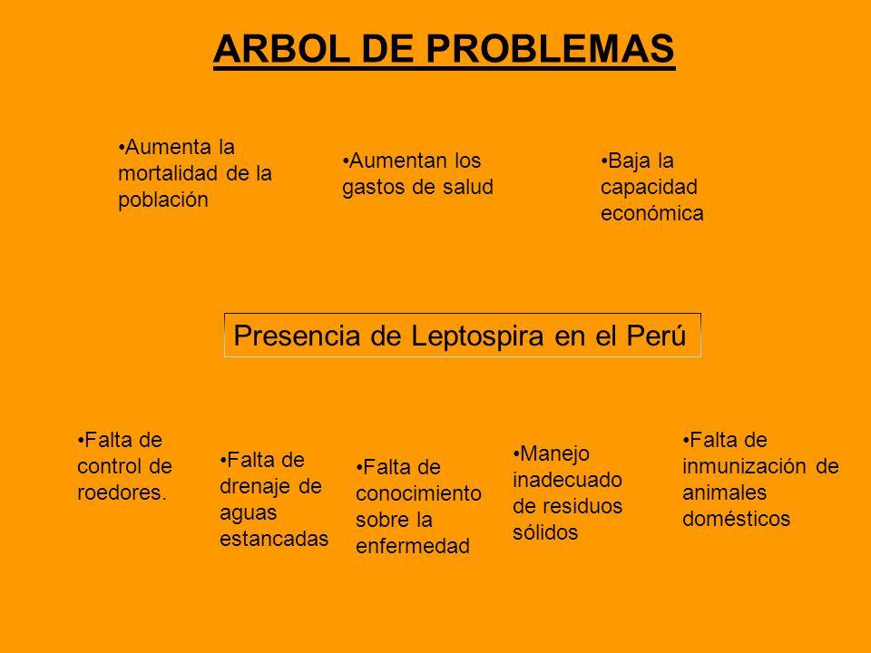 ARBOL DE PROBLEMAS Presencia de Leptospira en el Perú Falta de control de roedores. Falta de drenaje de aguas estancadas Manejo inadecuado de residuos