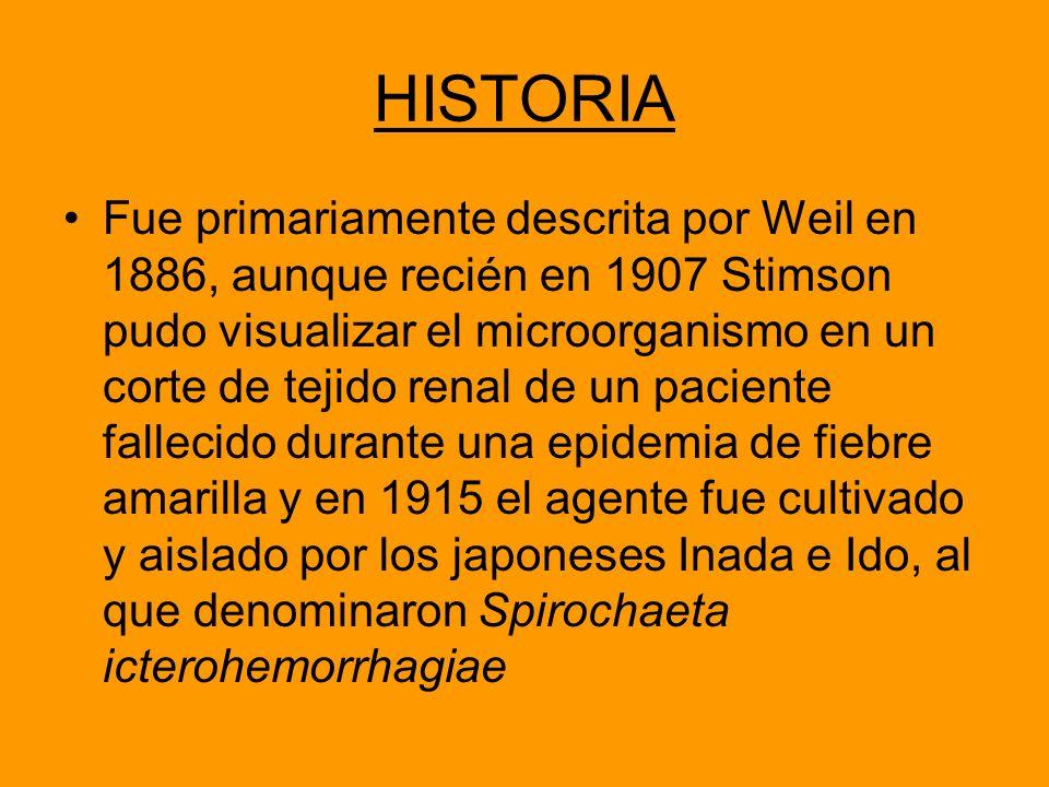HISTORIA Fue primariamente descrita por Weil en 1886, aunque recién en 1907 Stimson pudo visualizar el microorganismo en un corte de tejido renal de u