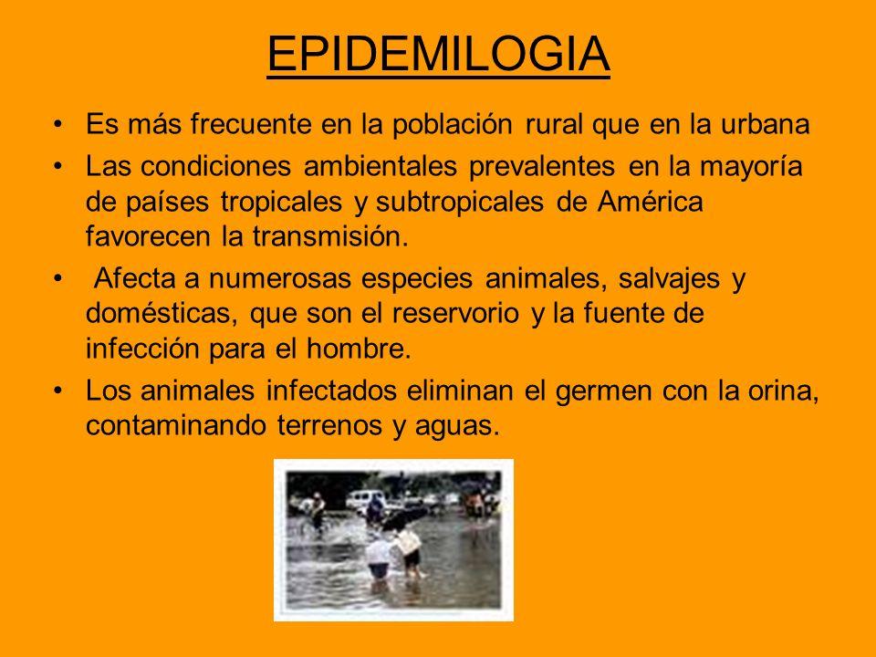 EPIDEMILOGIA Es más frecuente en la población rural que en la urbana Las condiciones ambientales prevalentes en la mayoría de países tropicales y subt