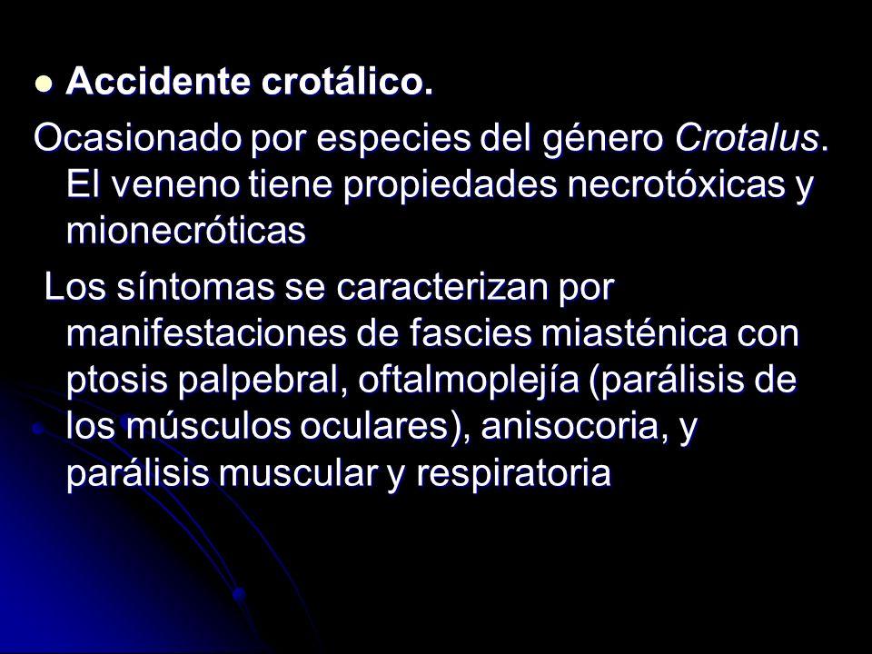 Accidente crotálico. Accidente crotálico. Ocasionado por especies del género Crotalus. El veneno tiene propiedades necrotóxicas y mionecróticas Los sí