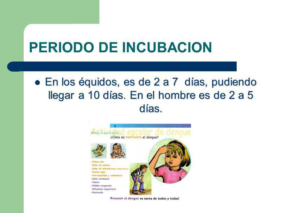 PERIODO DE INCUBACION En los équidos, es de 2 a 7 días, pudiendo llegar a 10 días. En el hombre es de 2 a 5 días. En los équidos, es de 2 a 7 días, pu