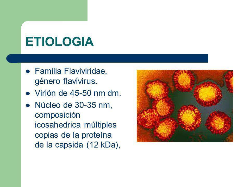 ETIOLOGIA Familia Flaviviridae, género flavivirus. Virión de 45-50 nm dm. Núcleo de 30-35 nm, composición icosahedrica múltiples copias de la proteína