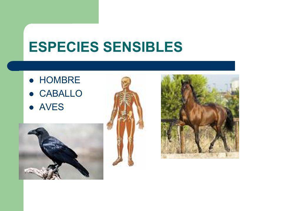 ESPECIES SENSIBLES HOMBRE CABALLO AVES