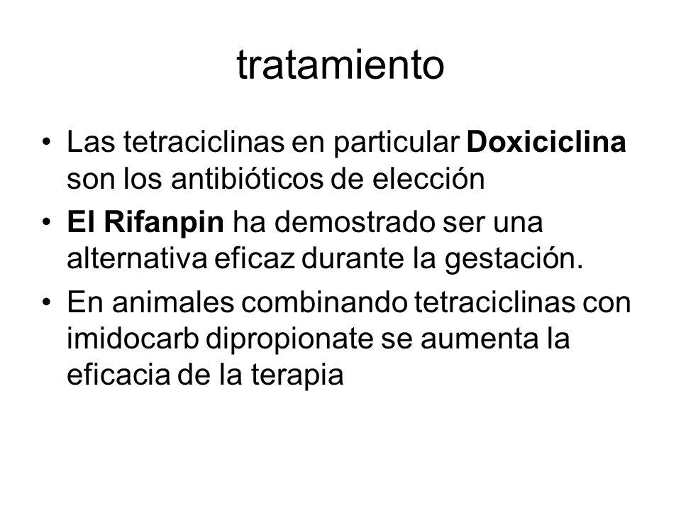 tratamiento Las tetraciclinas en particular Doxiciclina son los antibióticos de elección El Rifanpin ha demostrado ser una alternativa eficaz durante