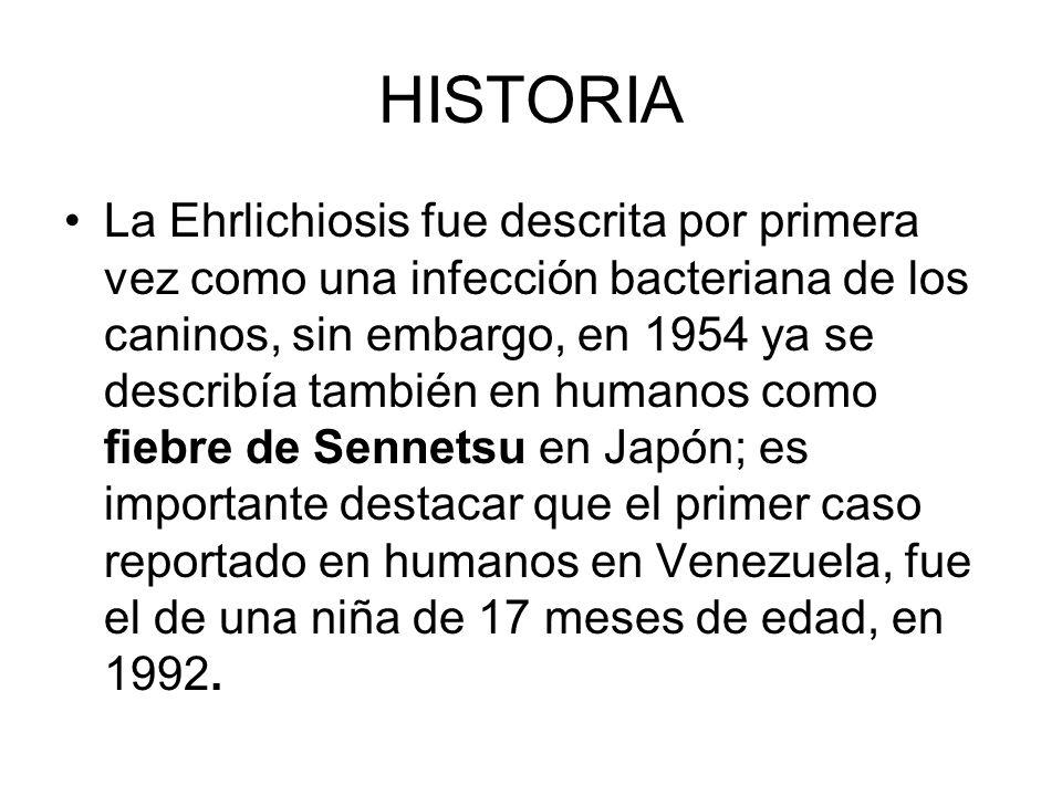 HISTORIA La Ehrlichiosis fue descrita por primera vez como una infección bacteriana de los caninos, sin embargo, en 1954 ya se describía también en hu