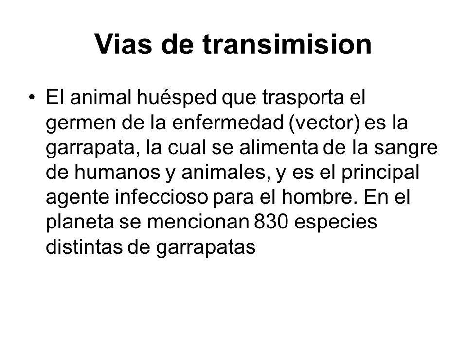 Vias de transimision El animal huésped que trasporta el germen de la enfermedad (vector) es la garrapata, la cual se alimenta de la sangre de humanos