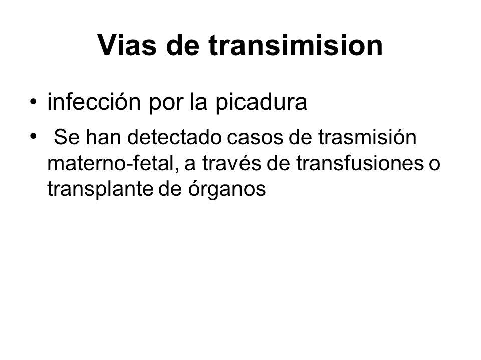 Vias de transimision infección por la picadura Se han detectado casos de trasmisión materno-fetal, a través de transfusiones o transplante de órganos