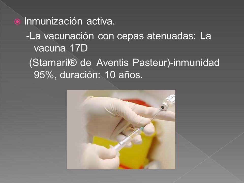 Inmunización activa. -La vacunación con cepas atenuadas: La vacuna 17D (Stamaril® de Aventis Pasteur)-inmunidad 95%, duración: 10 años.