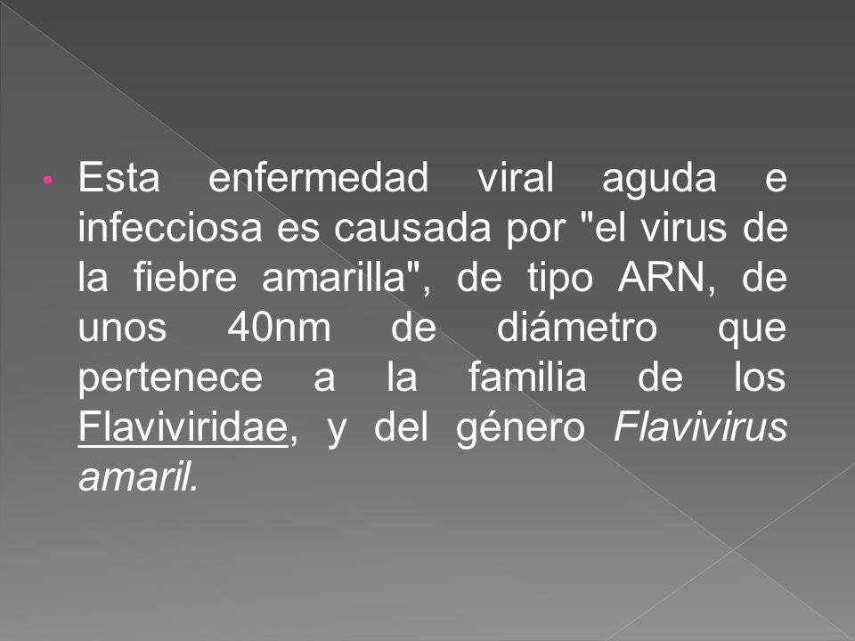 Esta enfermedad viral aguda e infecciosa es causada por