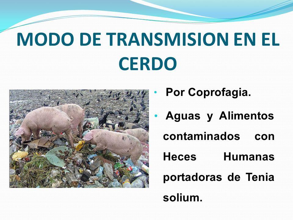 MODO DE TRANSMISION EN EL CERDO Por Coprofagia. Aguas y Alimentos contaminados con Heces Humanas portadoras de Tenia solium.