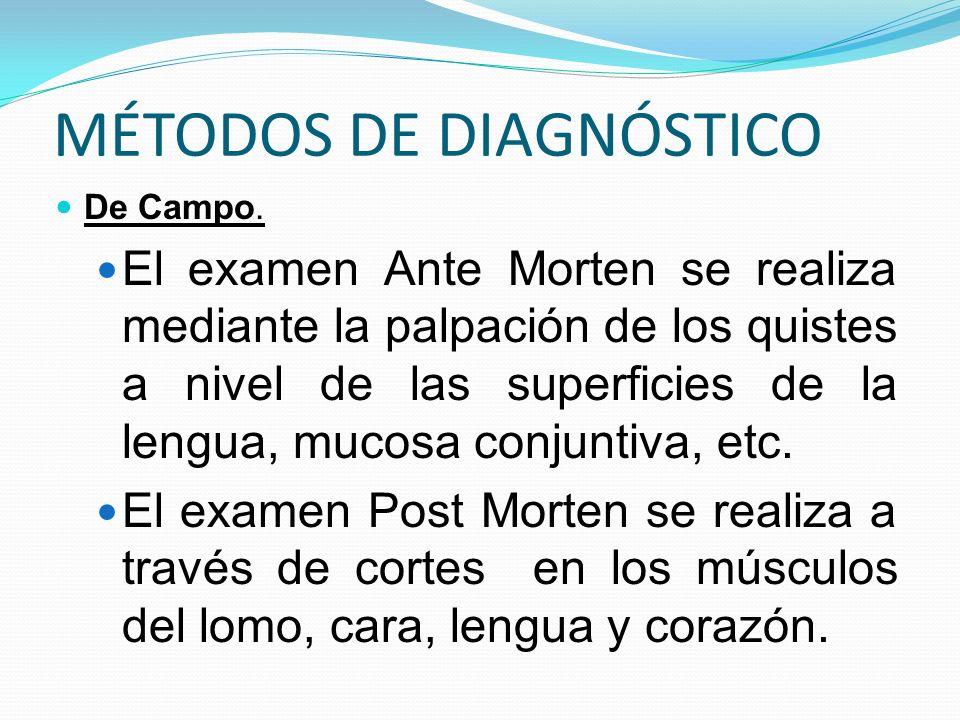 MÉTODOS DE DIAGNÓSTICO De Campo. El examen Ante Morten se realiza mediante la palpación de los quistes a nivel de las superficies de la lengua, mucosa