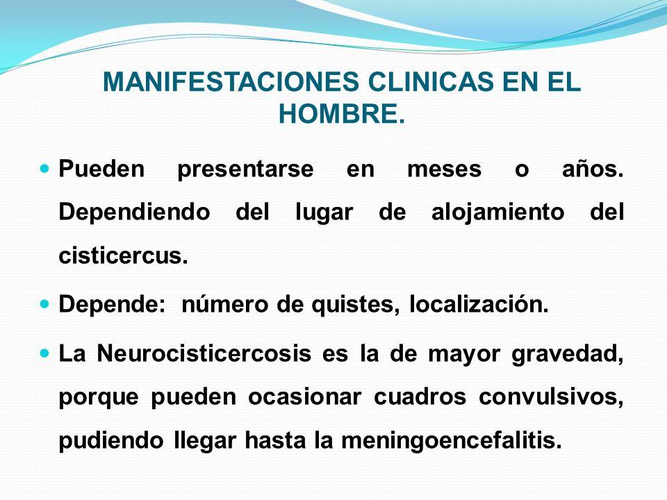 MANIFESTACIONES CLINICAS EN EL HOMBRE. Pueden presentarse en meses o años. Dependiendo del lugar de alojamiento del cisticercus. Depende: número de qu