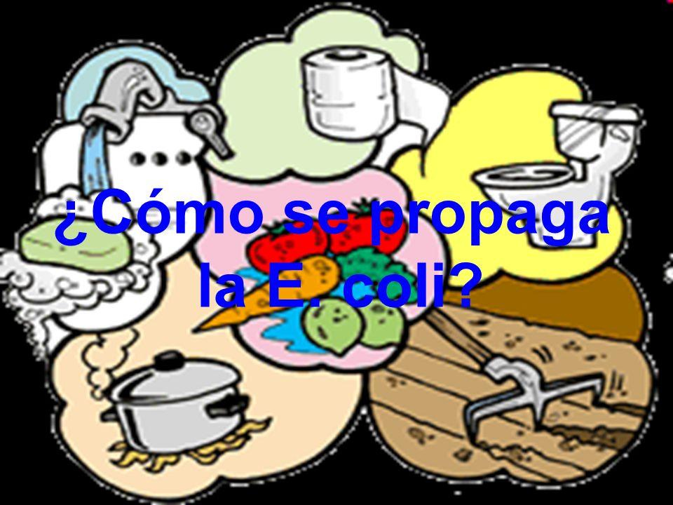 ¿Cómo se propaga la E. coli?