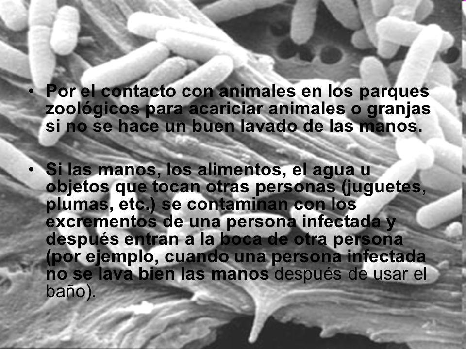 Por el contacto con animales en los parques zoológicos para acariciar animales o granjas si no se hace un buen lavado de las manos. Si las manos, los