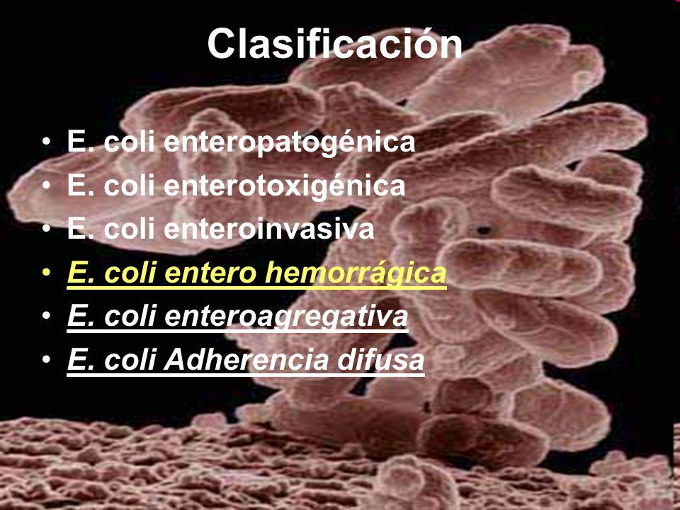 Clasificación E. coli enteropatogénica E. coli enterotoxigénica E. coli enteroinvasiva E. coli entero hemorrágica E. coli enteroagregativa E. coli Adh