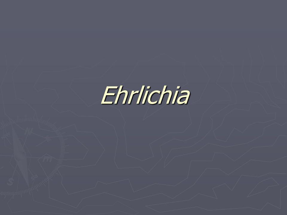 ¿Qué es la erliquiosis.