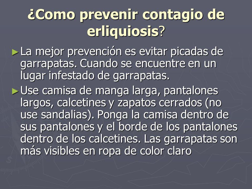 ¿Como prevenir contagio de erliquiosis? La mejor prevención es evitar picadas de garrapatas. Cuando se encuentre en un lugar infestado de garrapatas.