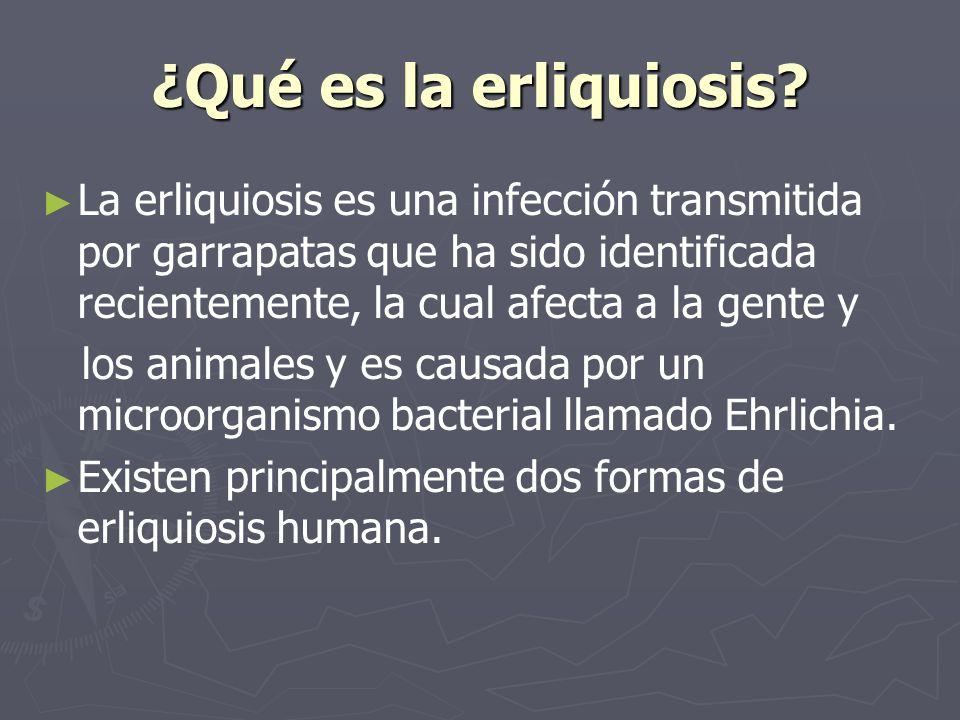 ¿Qué es la erliquiosis? La erliquiosis es una infección transmitida por garrapatas que ha sido identificada recientemente, la cual afecta a la gente y