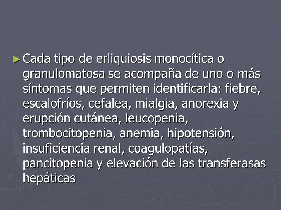 Cada tipo de erliquiosis monocítica o granulomatosa se acompaña de uno o más síntomas que permiten identificarla: fiebre, escalofríos, cefalea, mialgi