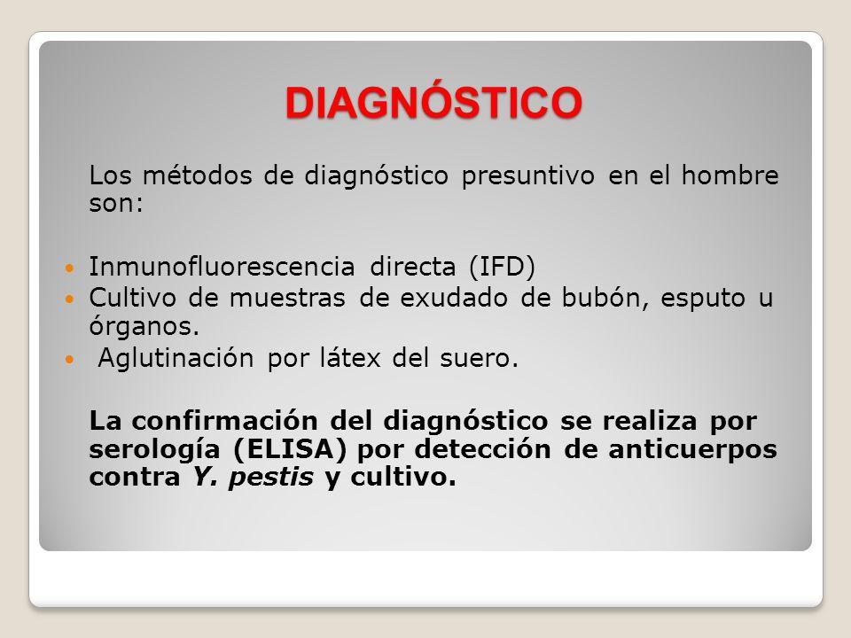 DIAGNÓSTICO Los métodos de diagnóstico presuntivo en el hombre son: Inmunofluorescencia directa (IFD) Cultivo de muestras de exudado de bubón, esputo