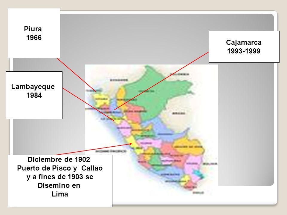 ANTECEDENTES Diciembre de 1902 Puerto de Pisco y Callao y a fines de 1903 se Disemino en Lima Lambayeque 1984 Piura 1966 Cajamarca 1993-1999