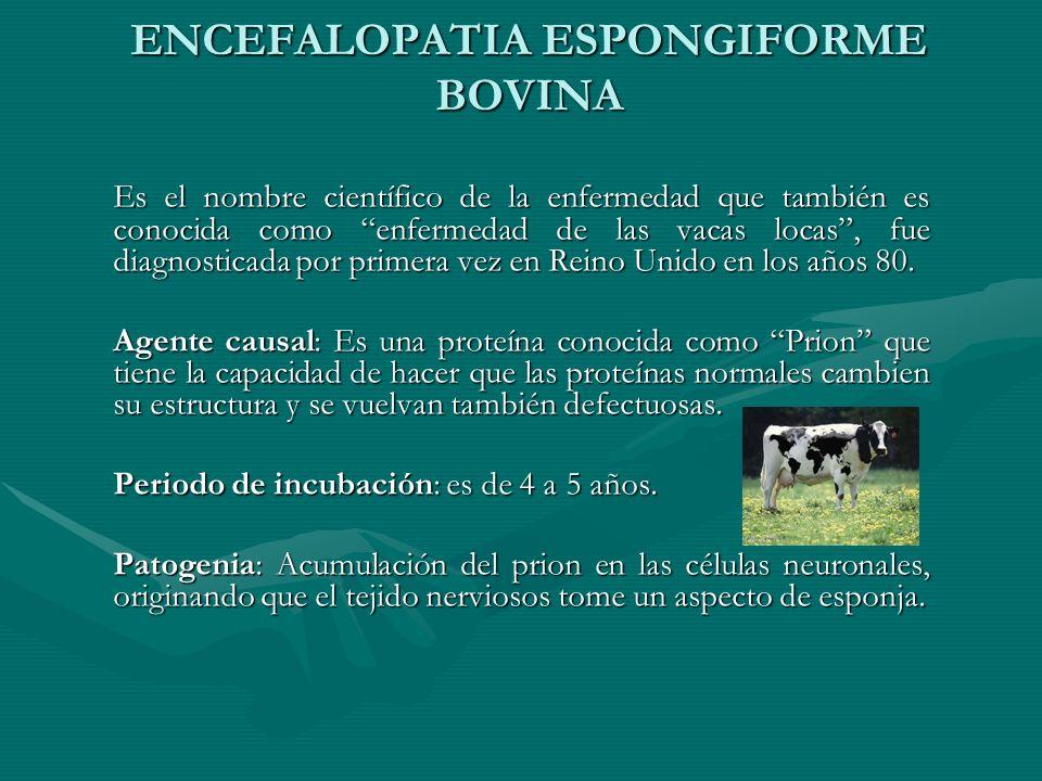 ENCEFALOPATIA ESPONGIFORME BOVINA Es el nombre científico de la enfermedad que también es conocida como enfermedad de las vacas locas, fue diagnostica