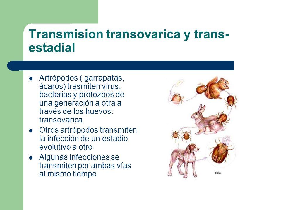 Transmision transovarica y trans- estadial Artrópodos ( garrapatas, ácaros) trasmiten virus, bacterias y protozoos de una generación a otra a través d