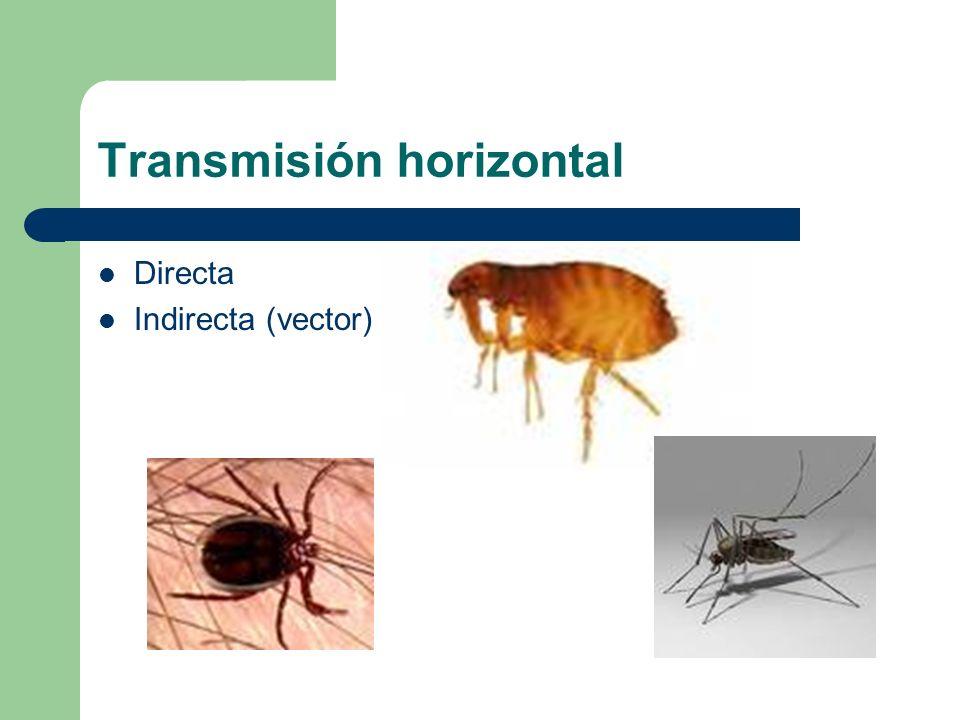 Transmisión horizontal Directa Indirecta (vector)