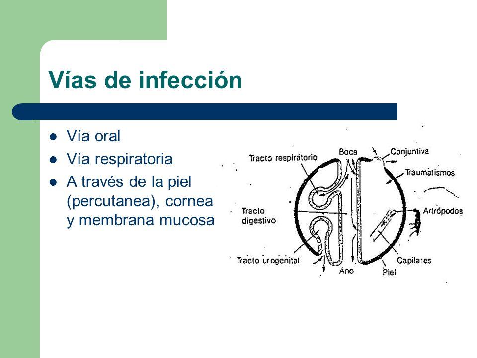 Vías de infección Vía oral Vía respiratoria A través de la piel (percutanea), cornea y membrana mucosa