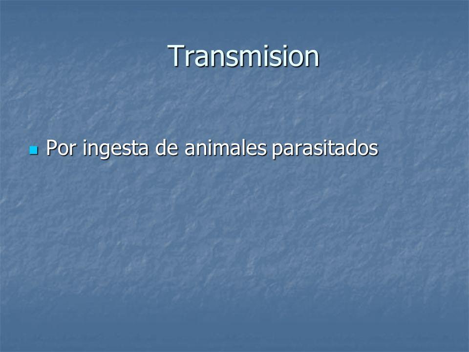 Transmision Transmision Por ingesta de animales parasitados Por ingesta de animales parasitados