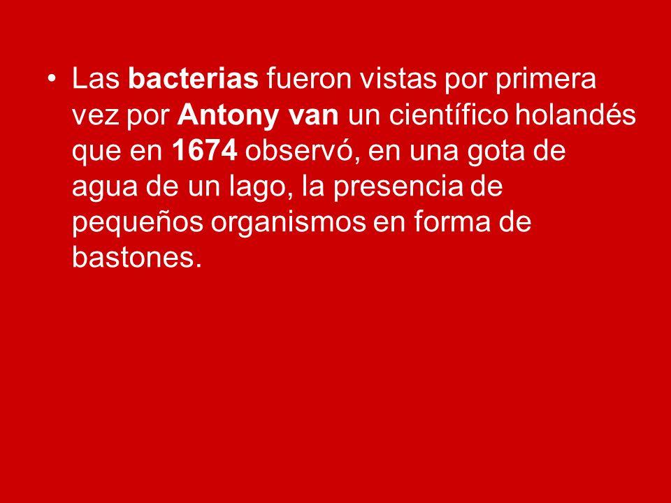 Las bacterias fueron vistas por primera vez por Antony van un científico holandés que en 1674 observó, en una gota de agua de un lago, la presencia de