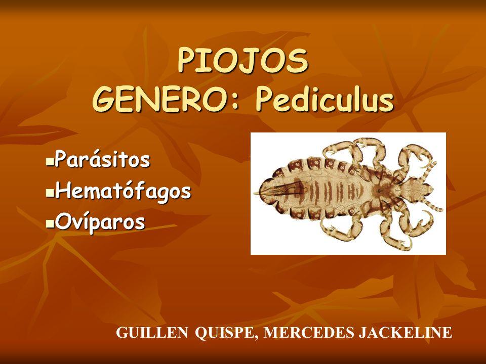 PIOJOS GENERO: Pediculus Parásitos Parásitos Hematófagos Hematófagos Ovíparos Ovíparos GUILLEN QUISPE, MERCEDES JACKELINE