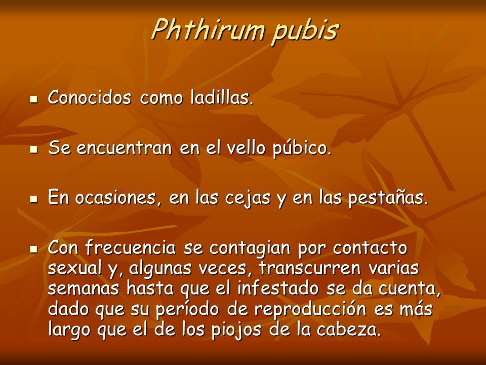 Phthirum pubis Conocidos como ladillas. Conocidos como ladillas. Se encuentran en el vello púbico. Se encuentran en el vello púbico. En ocasiones, en