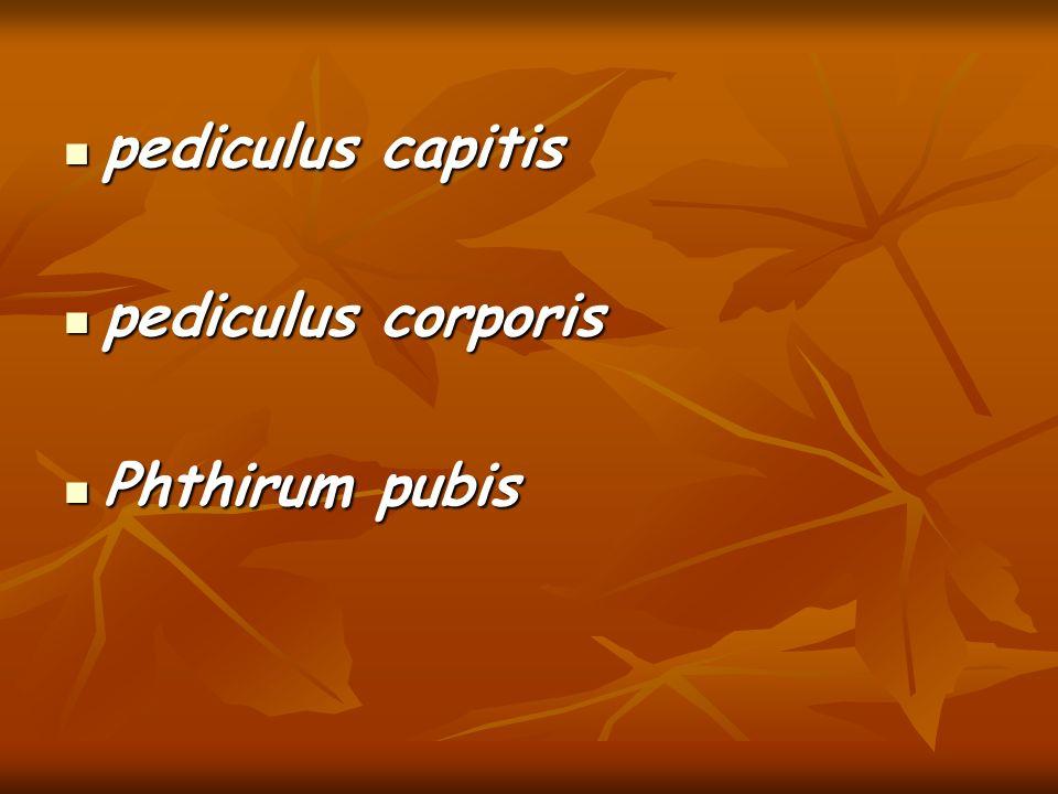 pediculus capitis pediculus capitis pediculus corporis pediculus corporis Phthirum pubis Phthirum pubis