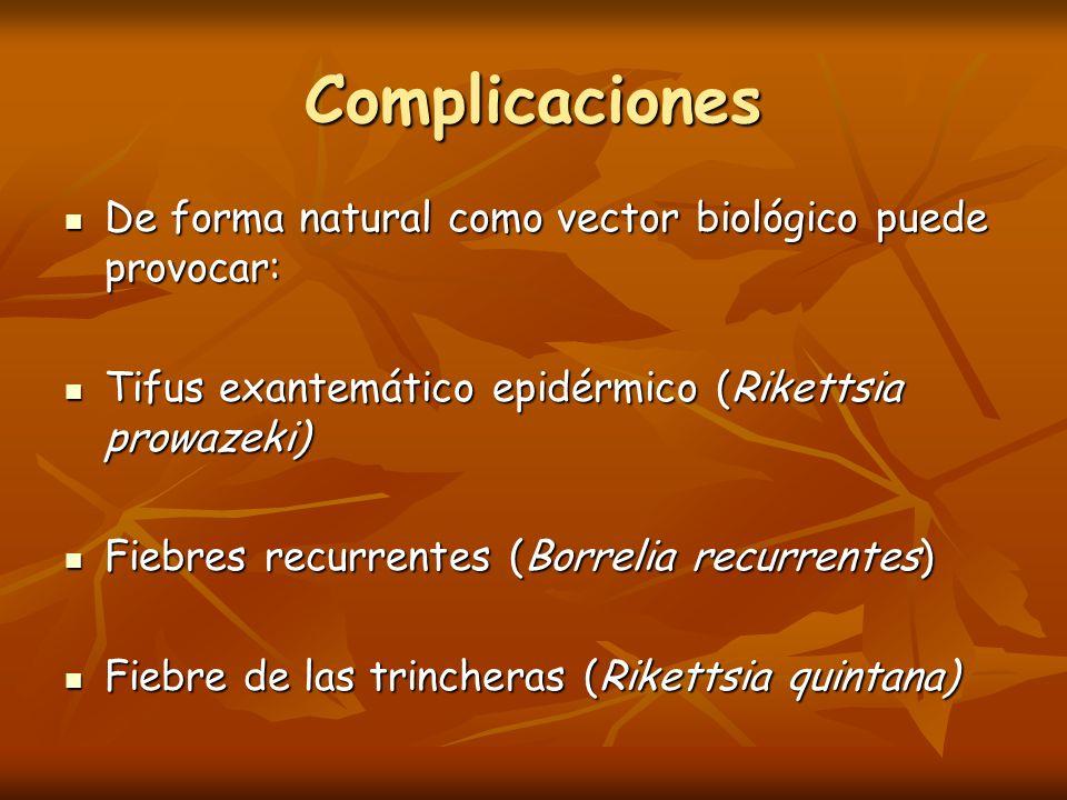 Tifus exantemático epidérmico (Rikettsia prowazeki) La transmisión no se produce por la picadura del insecto sino por la entrada de sus excrementos a través de erosiones producidas en la piel.