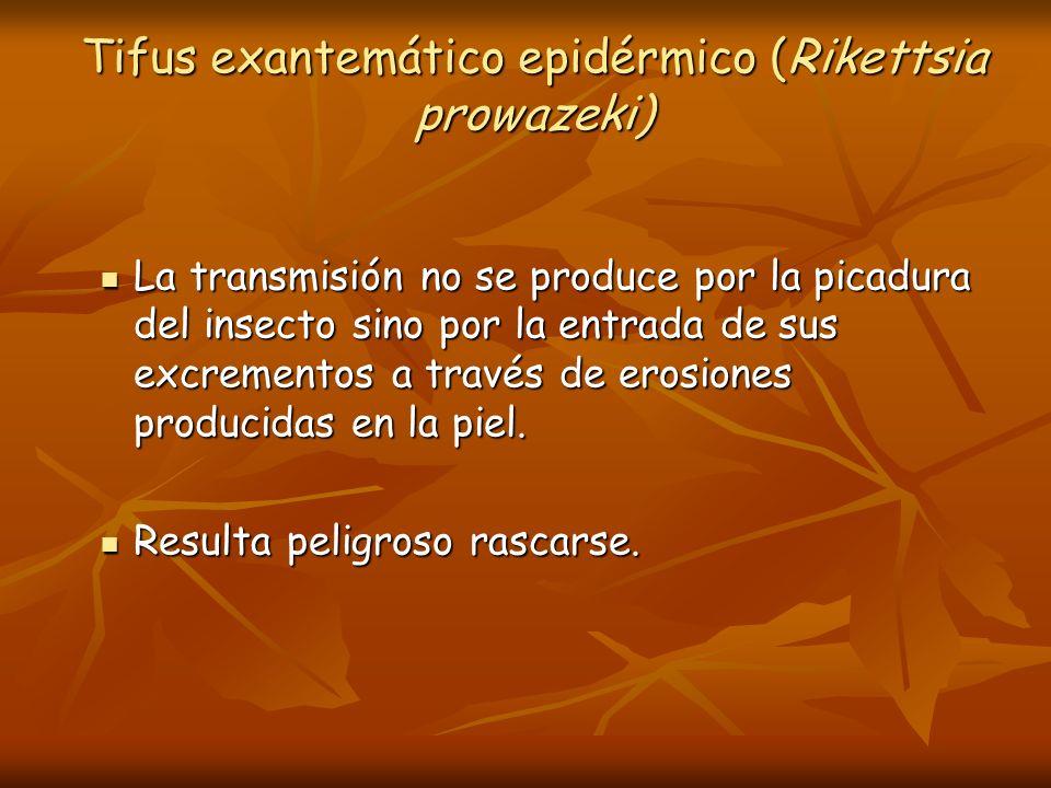 Tifus exantemático epidérmico (Rikettsia prowazeki) La transmisión no se produce por la picadura del insecto sino por la entrada de sus excrementos a