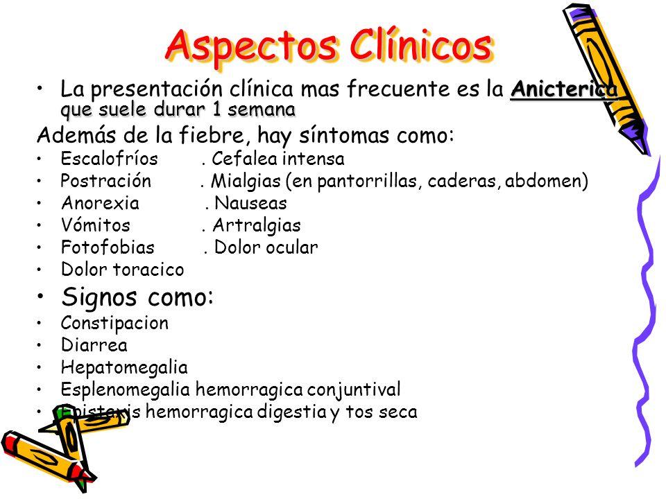 Anicterica que suele durar 1 semanaLa presentación clínica mas frecuente es la Anicterica que suele durar 1 semana Además de la fiebre, hay síntomas c