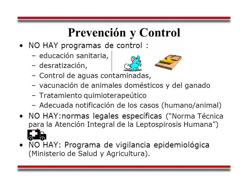 Prevención y Control NO HAY programas de control : –educación sanitaria, –desratización, –Control de aguas contaminadas, –vacunación de animales domés