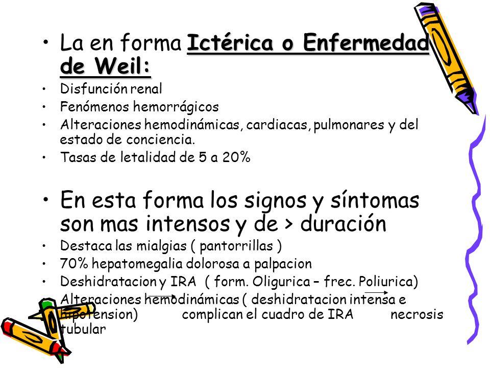 Ictérica o Enfermedad de Weil:La en forma Ictérica o Enfermedad de Weil: Disfunción renal Fenómenos hemorrágicos Alteraciones hemodinámicas, cardiacas