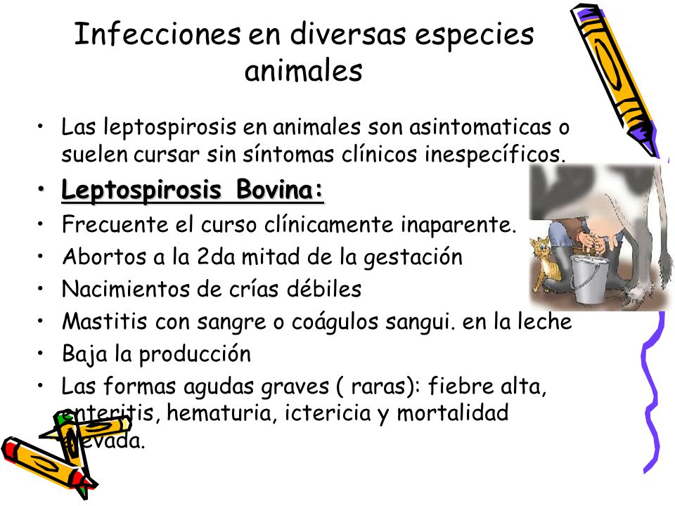 Infecciones en diversas especies animales Las leptospirosis en animales son asintomaticas o suelen cursar sin síntomas clínicos inespecíficos. Leptosp