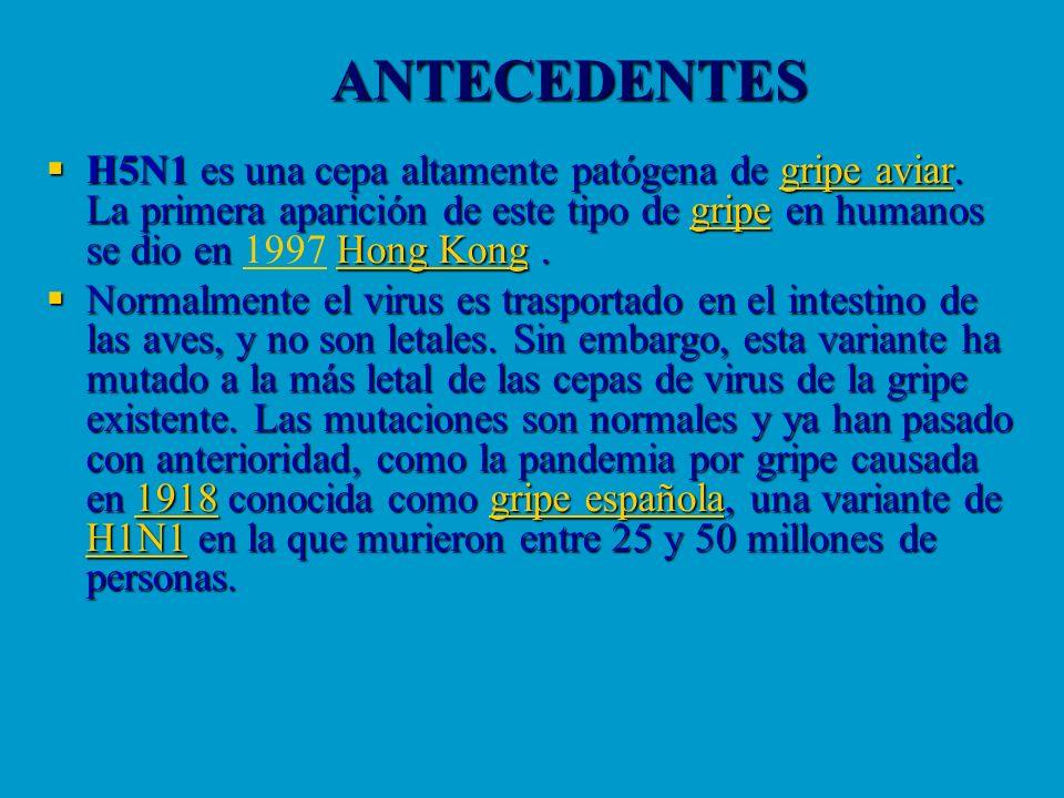 ANTECEDENTES H5N1 es una cepa altamente patógena de gripe aviar. La primera aparición de este tipo de gripe en humanos se dio en Hong Kong. H5N1 es un