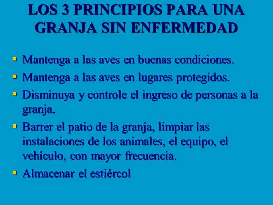 LOS 3 PRINCIPIOS PARA UNA GRANJA SIN ENFERMEDAD Mantenga a las aves en buenas condiciones. Mantenga a las aves en buenas condiciones. Mantenga a las a