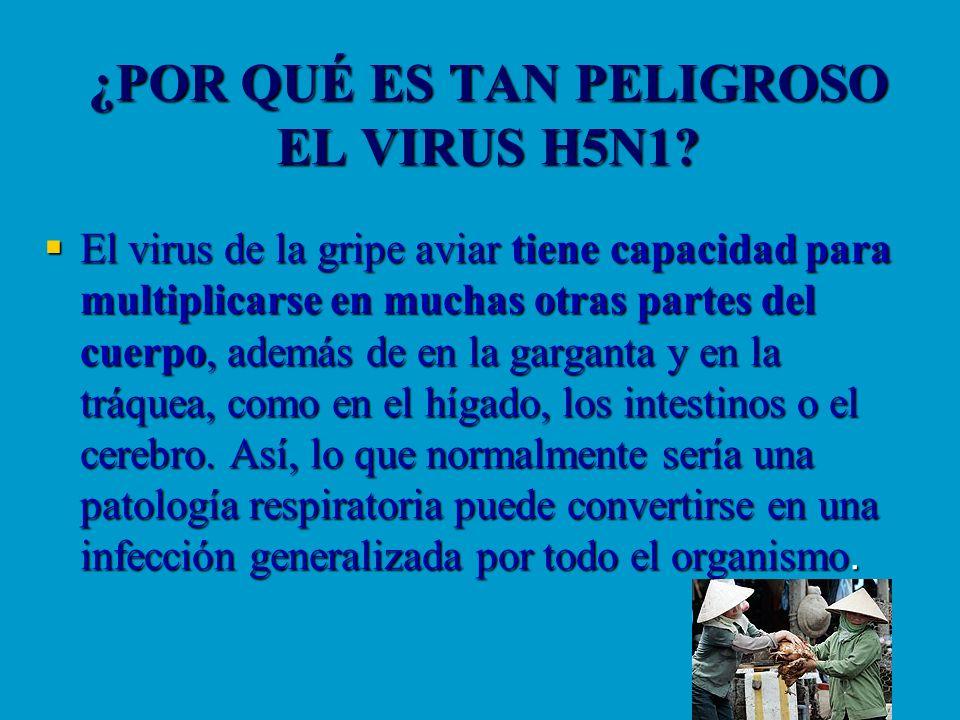 ¿POR QUÉ ES TAN PELIGROSO EL VIRUS H5N1? El virus de la gripe aviar tiene capacidad para multiplicarse en muchas otras partes del cuerpo, además de en